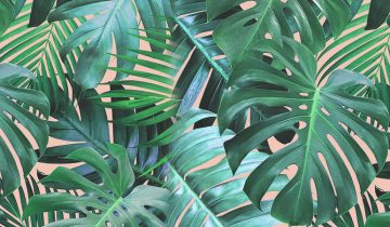 Why buy tropical wallpapers?