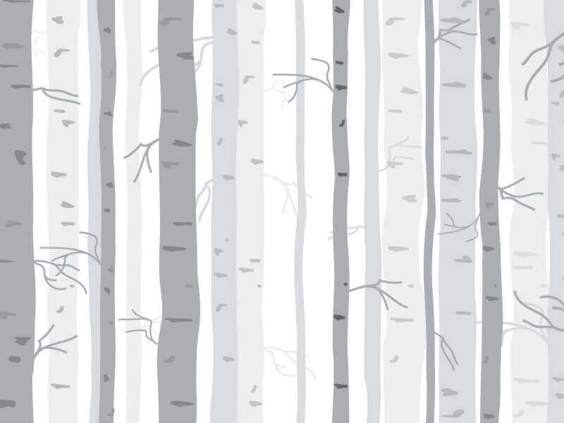 Birch Tree Wallpaper Pattern