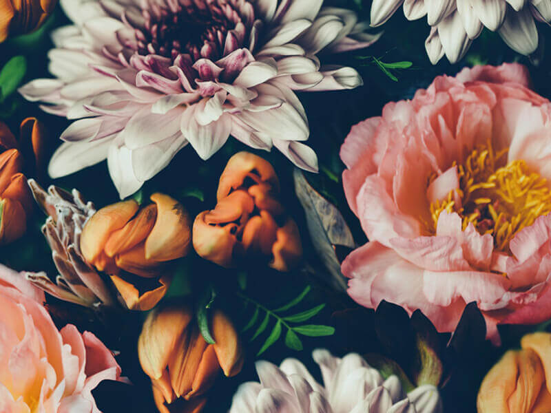 Floral Peony Wallpaper Pattern