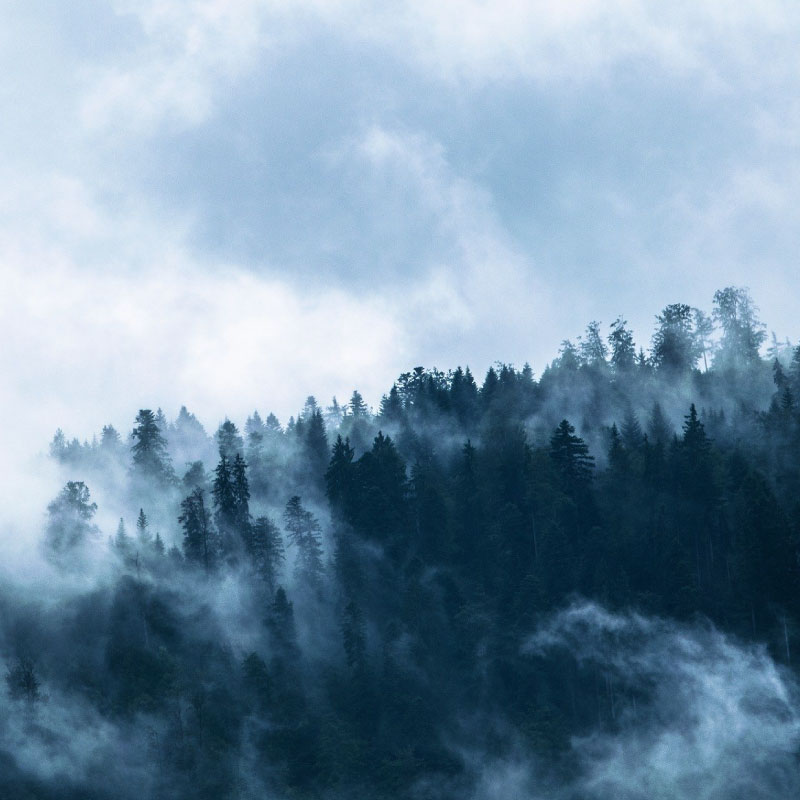Foggy Forest Pattern